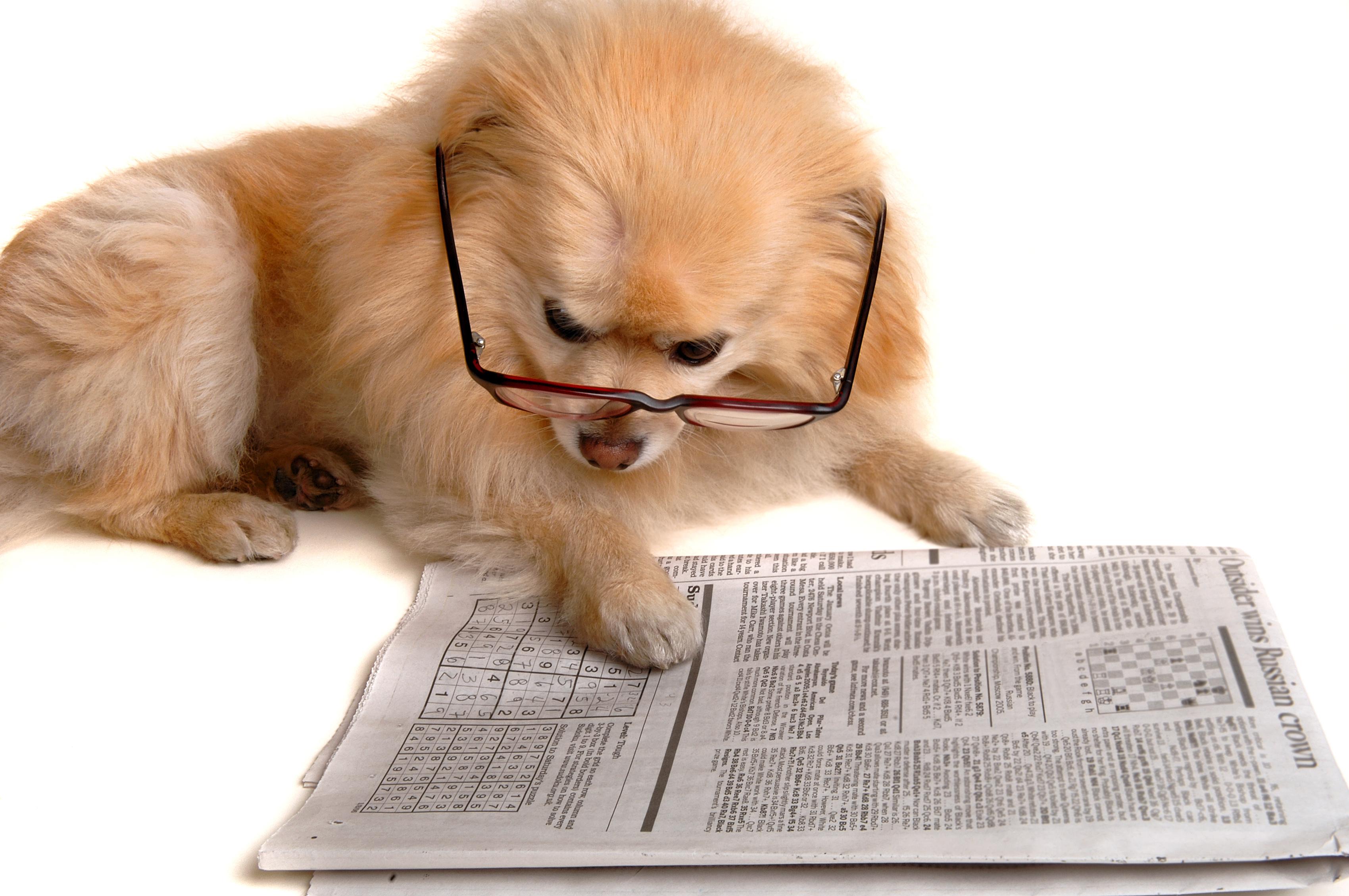 Grafik therapiehunde, texten-im-internet